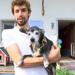 le chien le plus âgé du monde