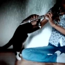 Flûte et chat