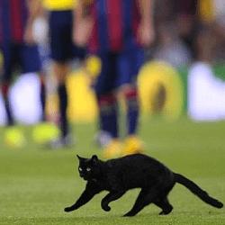 chat noir dans un match de foot