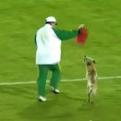 chien football streaker video