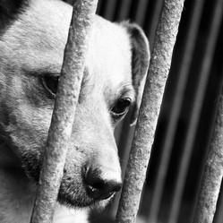 adoptez un animal abandonné grâce au forum Rescue