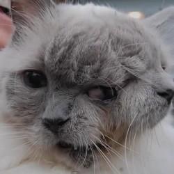 frank et louie chat à deux têtes