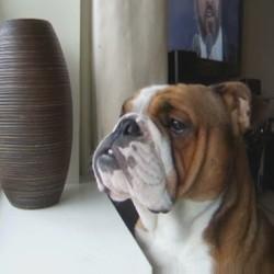 Ce chien chanteur se prend pour un ténor
