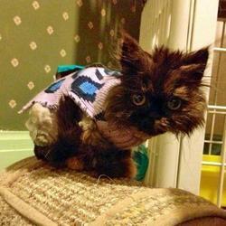 Un chat laissé pour mort émeut le monde entier
