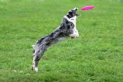 chien télé réalité sport canin