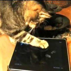 Friskies jeux chats