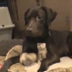 furet chien amis video