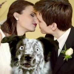 chien photobombing furminator