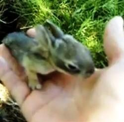 garcon apprivoise bebe lapin sauvage