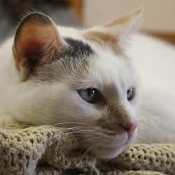Chat garde à domicile