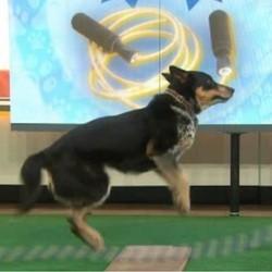 un chien championd e corde à sauter