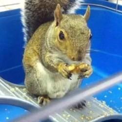 un écureuil prédit les résultats des élections américaines