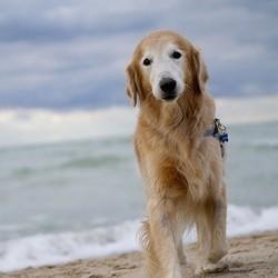 accessoires chien vacances