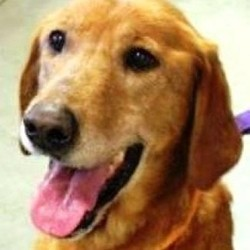 Affamé, un chien abandonné mange sa queue pour survivre