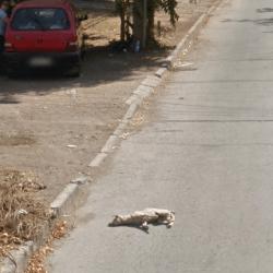 chien renversé Google street view