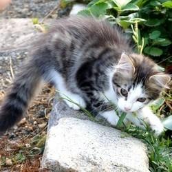 petit chat jouant dehors