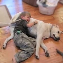 Gratouilles partagées entre un enfant et un chien