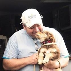 un homme sauve des centaines de chiens abandonnés