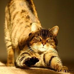 comment eviter griffures de chat