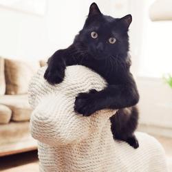 griffoir pour chat en forme de chien