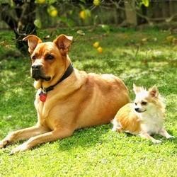 Un chien reconnaît un chien peu importe sa race