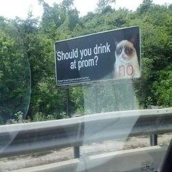 grumpy cat dit non à l'alcool