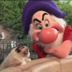 grumpy cat à Disneyland