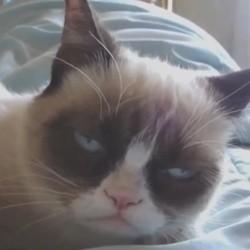 le harlem shake de grumpy cat