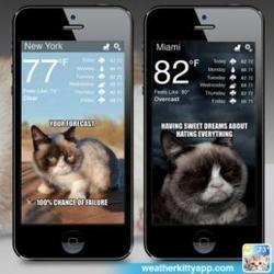 Application Weather Kitty Grumpy Cat