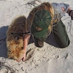 un chien vient en aide aux tortues en danger