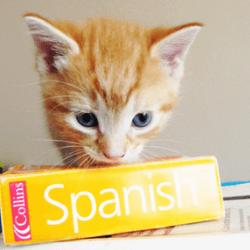des photos de chats pour apprendre des langues