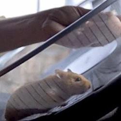 un hamster conduit un camion