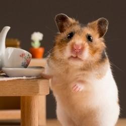 un hamster dans sa maison