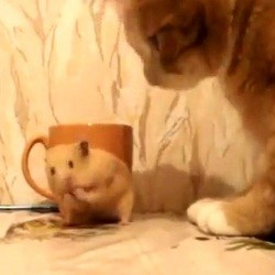 hamster chat video drole