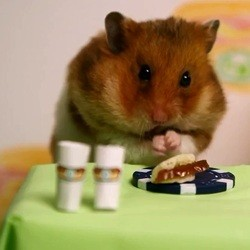 un hamster mange des mini hot dog