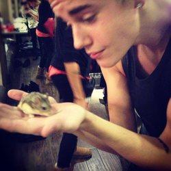 justin bieber hamster rongeur