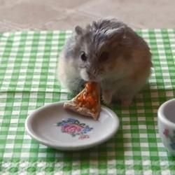 un hamster mange une petite pizza