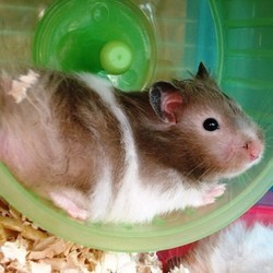 roue pour hamster video fun