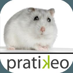 hamster iphone