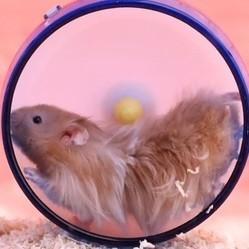 hamsters en slow motion