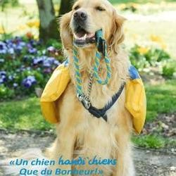 chien assistance accompagnement handicapé handi chiens