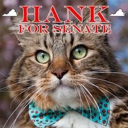 Hank, un chat candidat au Sénat américain