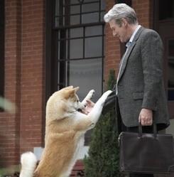 Hatchi le film chien Akita Inu