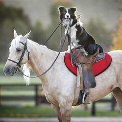 un chien monte à cheval