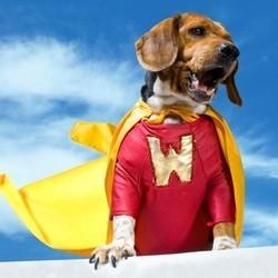meilleures histoires chiens heros