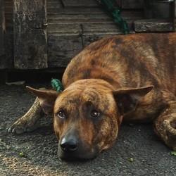 hoarders maltraitance chien malheureux
