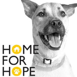 Home for Hope Ikea