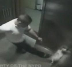 un homme frappe son chien dans l'ascenseur