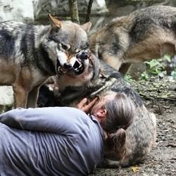 livre homme parmi les loups