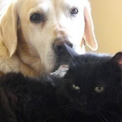 Un chat et un chien doués de la parole bientôt au cinéma